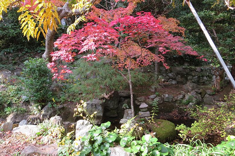 太江寺の紅葉