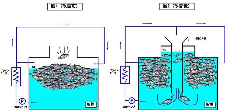 鰹一本釣り船 凍結装置